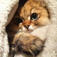 Фотография профиля Натальи Гальцовой ВКонтакте