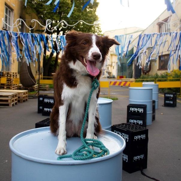 Петербургский бренд амуниции для собак сделал рекламу с о...