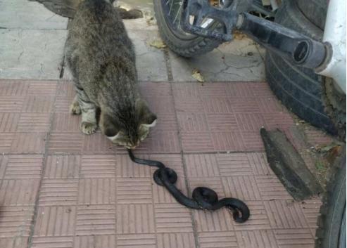 В Самарской области кот бросился на змею в доме, з...