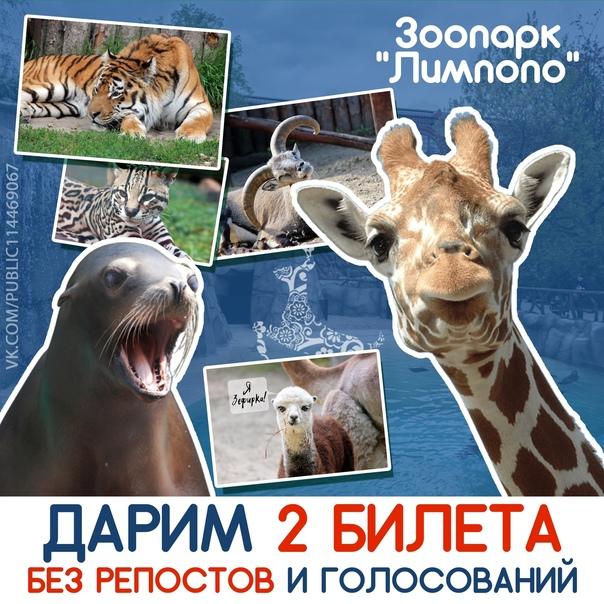 УЖЕ СЕГОДНЯ 🔥 ИТОГ на 🐪 2 билета в зоопарк