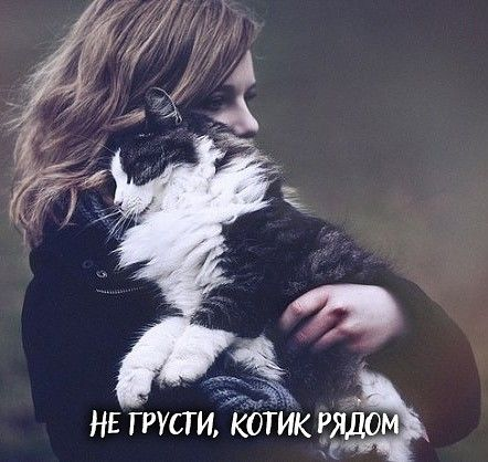 Кот - и есть твой лучший психолог