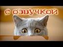 Приколы с котами – Смешные коты! ОЗВУЧКА ЖИВОТНЫХ 2019 - РЖАКА ДО СЛЁЗ!– PSO
