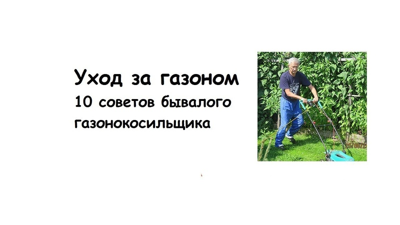 Уход за газоном. 10 советов бывалого газонокосильщика.