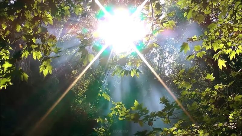 Самая Красивая Музыка обволакивающая душу нежным теплом Мелодия Солнечное утро Послушайте