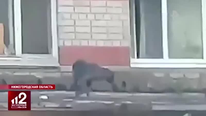 Это твое собачье дело жители дома ополчились против собаки