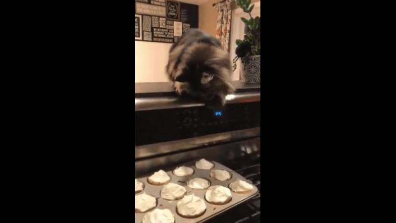Видео сладкого котику захотелось Video of sweet cat wanted Dbltj ckflrjuj rjnbre pf jntkjcm
