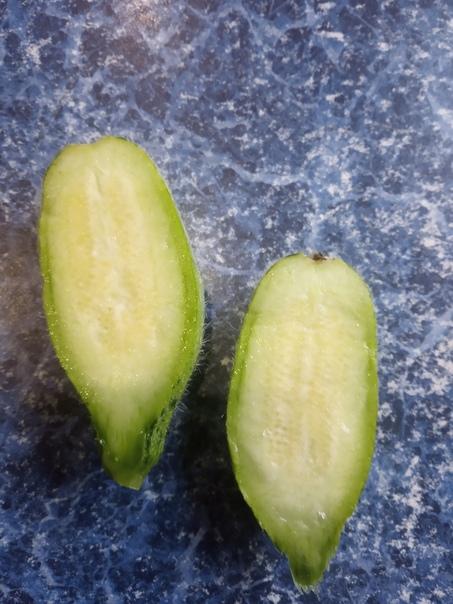 Кто знает, что у меня вырасло Пахнет , как огурец на вкус не похож Волосатое чудо.Твердый плод, ели разрезала.(источник: