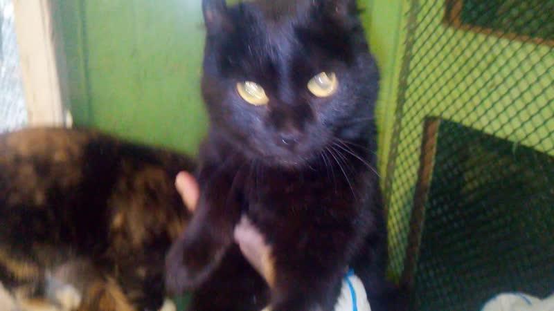 Чёрная дьяволица и белая кошка с голубыми глазами поехали домой на Дружбу.