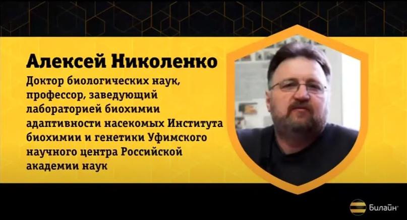 Россия внедряет рапс и идет по китайскому пути гибели пчёл – говорит профессор Николенко, изображение №2