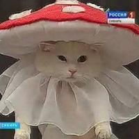 Фотография профиля Виктории Волковой ВКонтакте