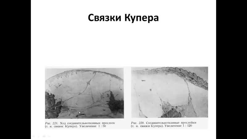 Клиническая и ультразвуковая анатомия молочных желез В А Изранов