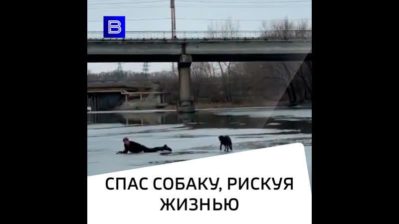 Спас собаку рискуя жизнью