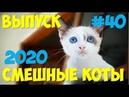 Смешные КОТЫ и Кошки 2020 Выпуск 40 видеоролики про кошек